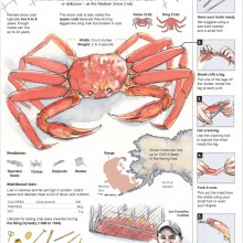 "View ""How to eat a snow crab"""